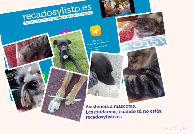 Canguro mascotas con Recadosylisto.es